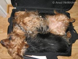 matkalaukku_SaniTessa